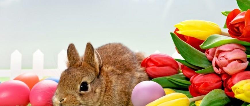 Autókölcsönzés Húsvétkor!
